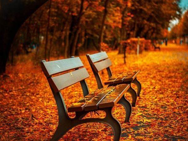 2008636520-bench-560435_640.jpg